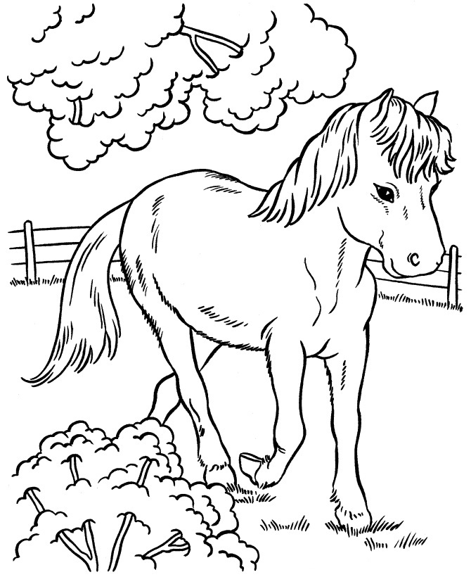 baby horse colouring pages picture