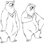 Bear Coloring Page Photo