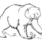 Bear Coloring Page for Kids Images