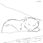 Bear Coloring Page for Kids Photos