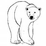Bear Coloring Pages Images