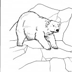 Bear Coloring Pages for Kids Image