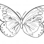 Photos of Butterfly Coloring Page