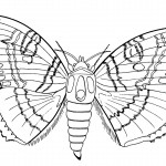 Butterfly Coloring Page for Kids Image