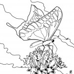 Images of Butterfly Coloring Page for Kids