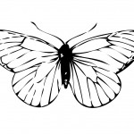 Photo of Butterfly Coloring Page for Kids