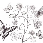Photos of Butterfly Coloring Page for Kids