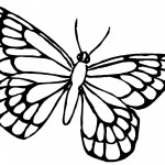Image of Butterfly Coloring Pages