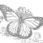 Images of Butterfly Coloring Pages