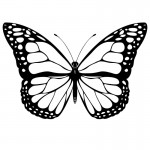Photo of Butterfly Coloring Pages Photo