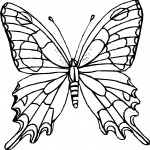 Picture of Butterfly Coloring Pages