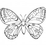 Butterfly Coloring Pages Printable Photo