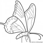 Image of Butterfly Coloring Pages Printable