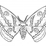 Butterfly Coloring Pages for Kids Picture