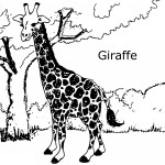 Coloring Page of Baby Giraffe Photo