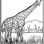 Coloring Page of Giraffe Images