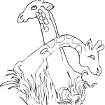Coloring Page of Giraffe Photo