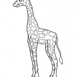 Coloring Page of Giraffe Photos