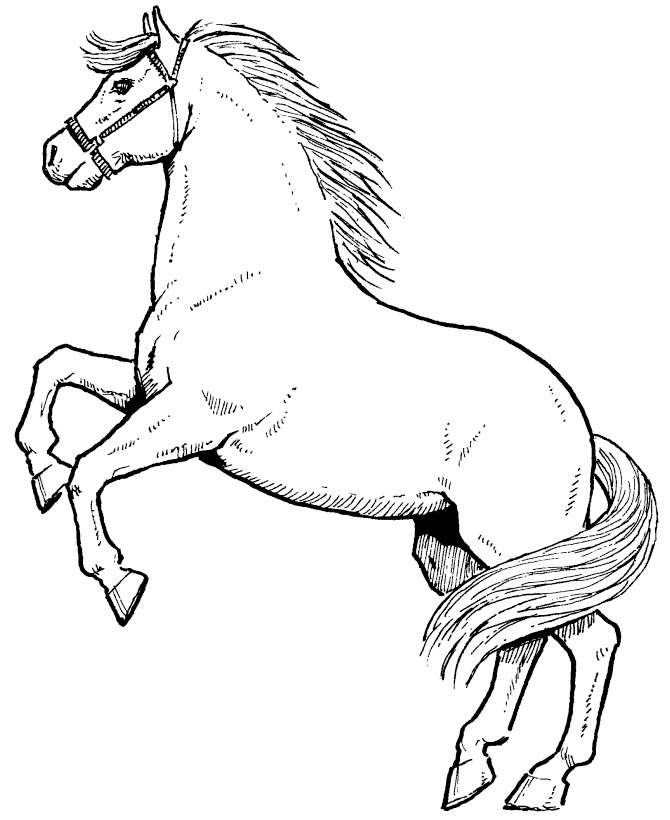image of coloring page of horse