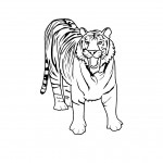 Coloring Page of Tiger