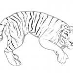 Coloring Page of Tiger Photo