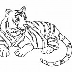 Coloring Page of Tiger Picture