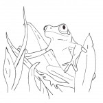 Coloring Pages of Frog Picture