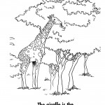 Coloring Pages of Giraffe Photo
