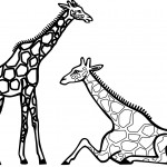 Coloring Pages of Giraffe Photos