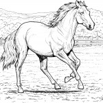 Coloring Pages of Horse Image