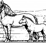 Coloring Pages of Horses Photo