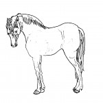 Picture of Coloring Pages of Horses