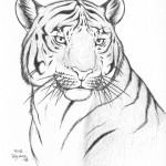 Coloring Pages of Tiger Picture