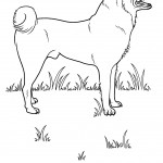 Photos of Dog Coloring Page Photos