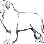 Photos of Dog Coloring Pages