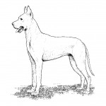 Photo of Dog Coloring Pages for Kids