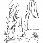 Drinking Water Horse Coloring Page Picture