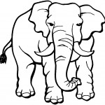 Elephant Coloring Page Photos
