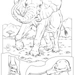 Elephant Coloring Pages Photo