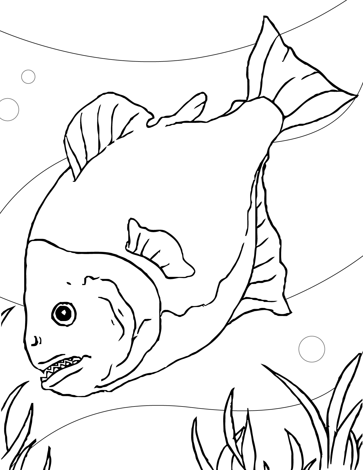 free printable fish coloring pages for kids animal place