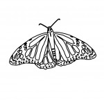 Photos of Free Butterfly Coloring Page