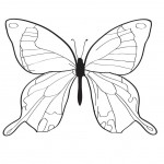 Free Butterfly Coloring Page for Kids Photo