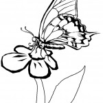 Photo of Free Butterfly Coloring Page for Kids