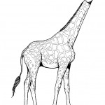 Giraffe Coloring Page Photos