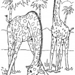 Giraffe Coloring Page Pictures