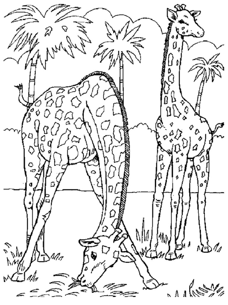 Children's coloring pages animals - Children's Coloring Pages Animals 28