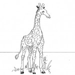 Giraffe Coloring Page for Kids Pictures
