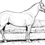Image of Horse Coloring Pages