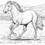 Photo of Horse Coloring Pages
