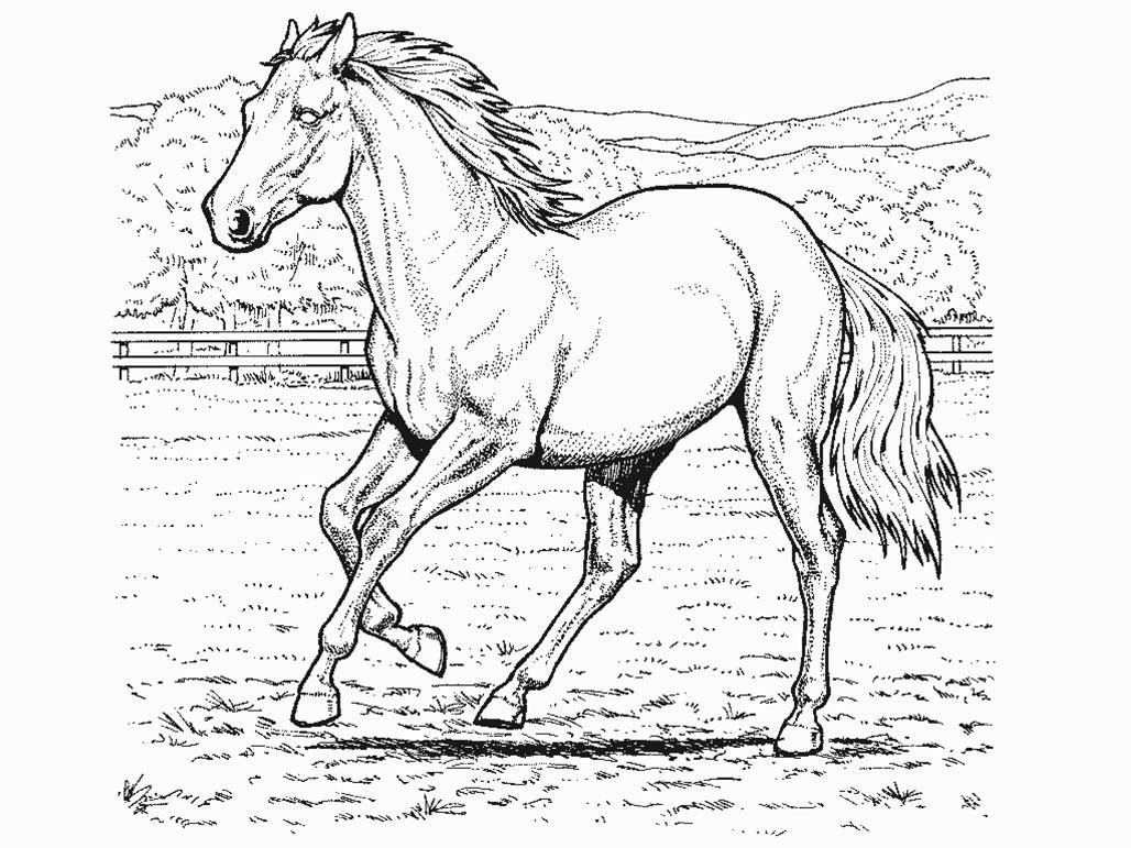 Coloring pages for horses - Horse Rider Coloring Pages Okids